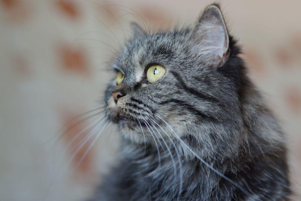 Co může ohrozit kočičí kožíšek?