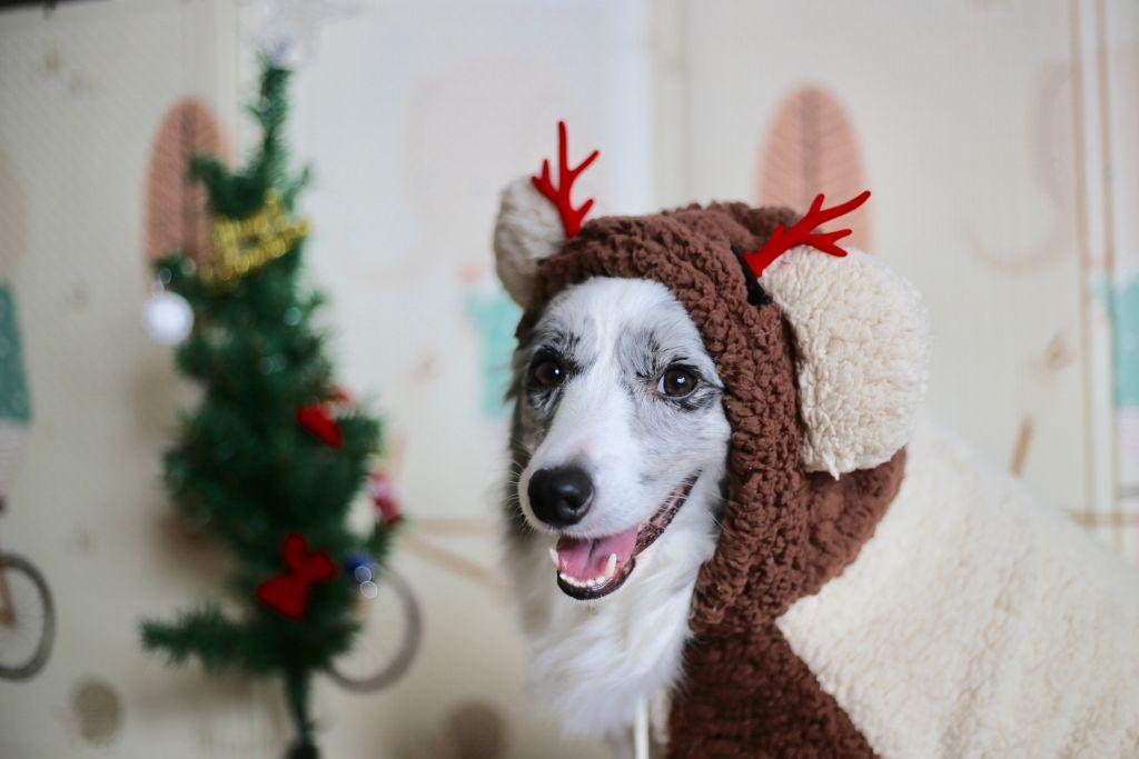 Vánoční stůl: přísný zákaz pro zvířata