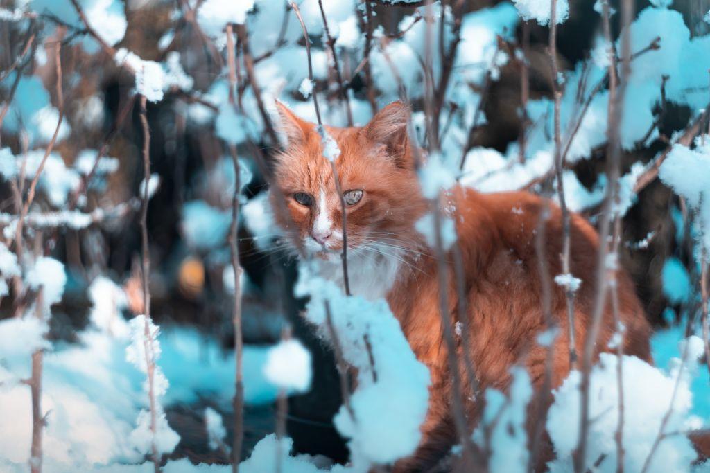 Jak na podporu imunity v zimě?