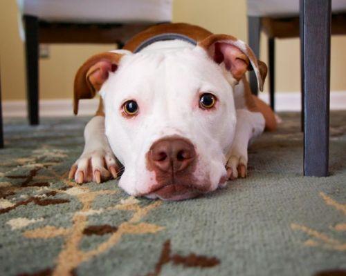 Jak na psí pedikúru doma?