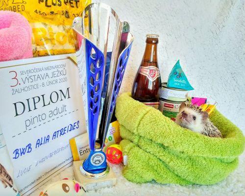 3. Mezinárodní výstava ježků