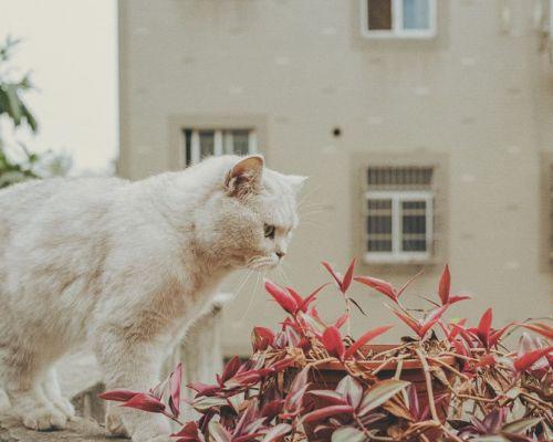 Kočka a změna prostředí