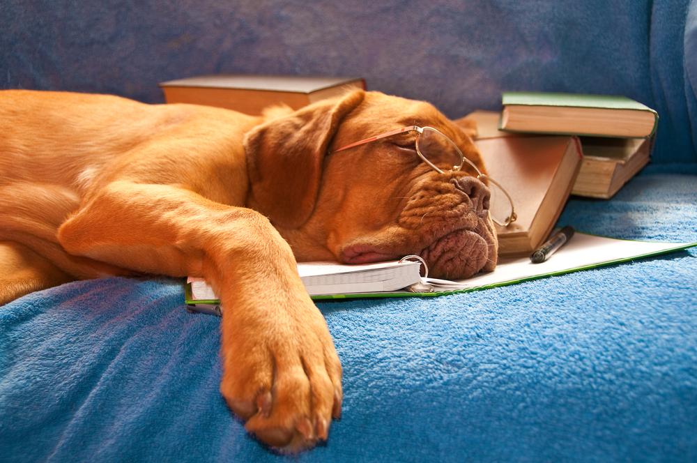 Péče o psa seniora: šest základů