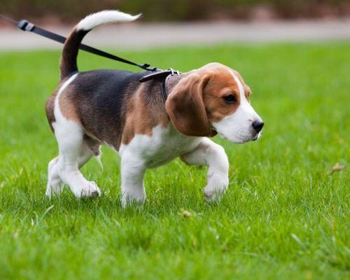 Artróza u psů. Příznaky a léčba
