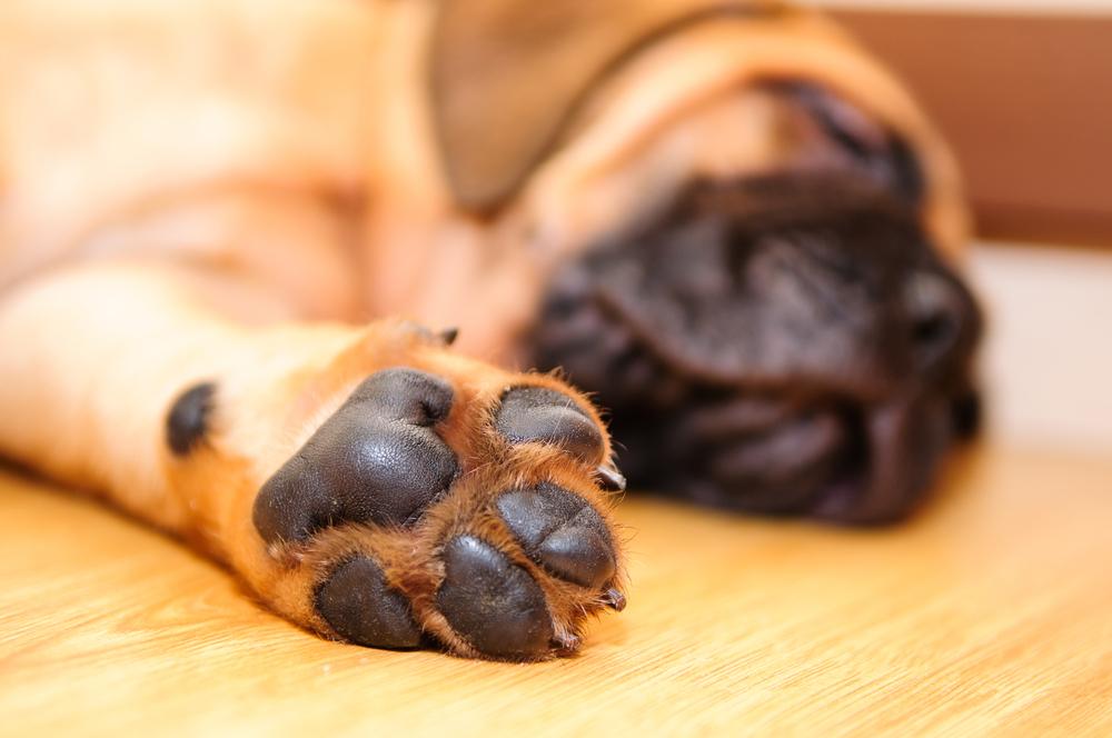 Jak se správně starat o psí tlapky?