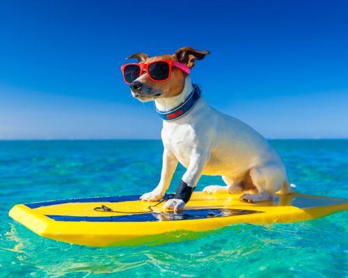Jak poznat přehřátí u psa?