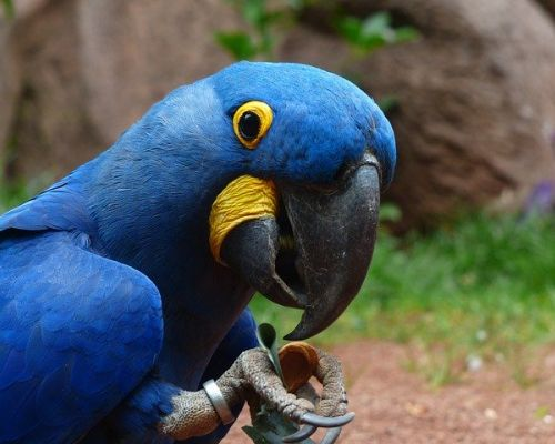 Jak vybrat papouška?