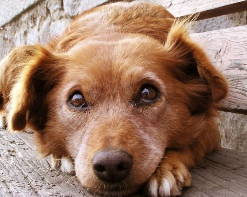 Co dělat, když se váš pes všeho bojí?
