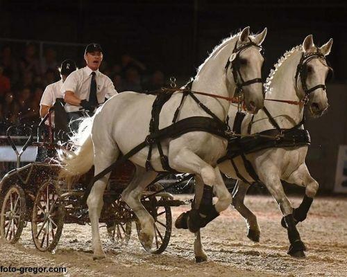 Výstava kůň v Lysé nad Labem