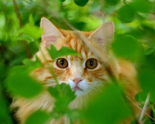 Čerstvá tráva pro kočky: jak to ovlivňuje zdraví vašeho mazlíčka?