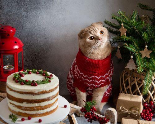 Kočka a vánoční stůl: co dělat, když dojde k otravě?