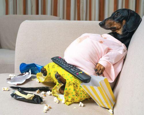 Pes, vy a karanténa: jak zabavit zvíře doma?