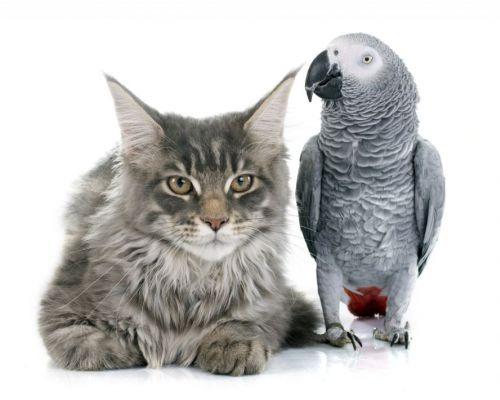 Kočka a papoušek – jak na to, aby se z nich stali nejlepší přátelé?