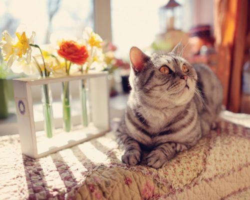 Typické jarní nemoci u koček