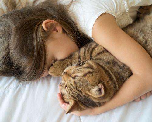 Noční mňoukání: jak jej kočku odnaučit?