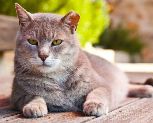 Příznaky stárnutí kočky. Jak se postarat o zvíře ve vyšším věku?