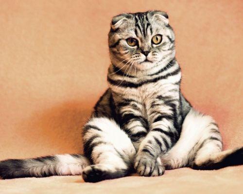 Kočky a onemocnění ledvin. Příznaky, příčiny, léčba
