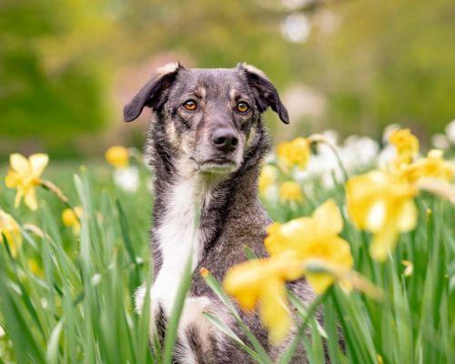 Proč pes kulhá? Možné příčiny
