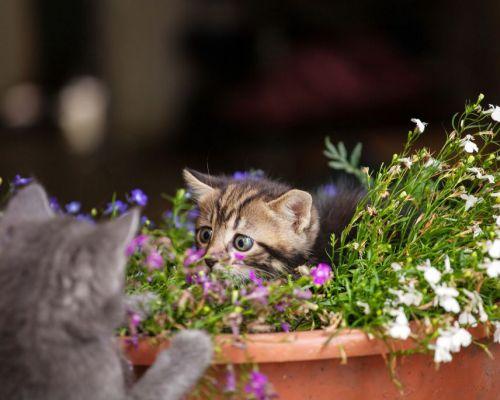 Jak odnaučit kočku skákat po květináčích?
