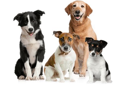 EnteroZOO pro psy a štěňata